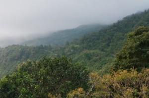 Dans la région de Boquete, les alentours du Lost and Found